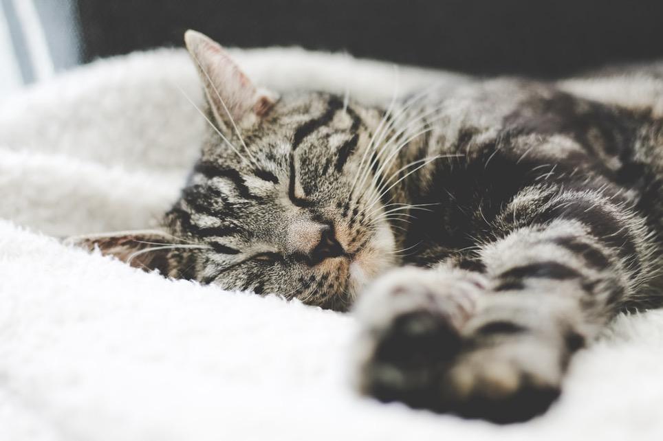 Философия домашнего уюта и счастья